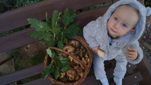 obrázek Pan Božský na houbách